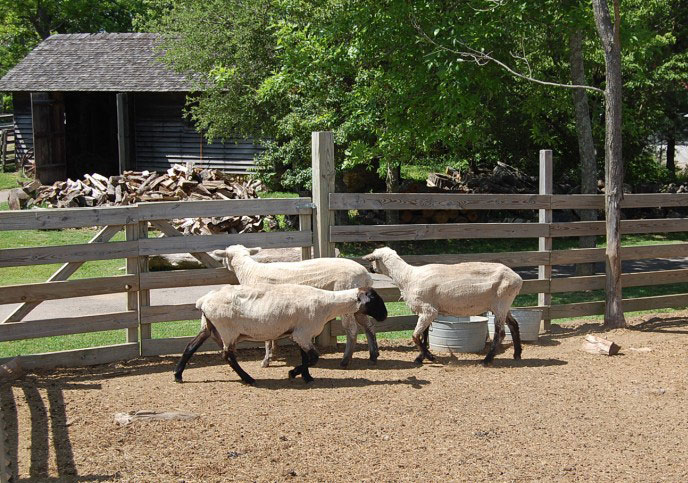 Petting Zoo at Burritt Museum Huntsville AL